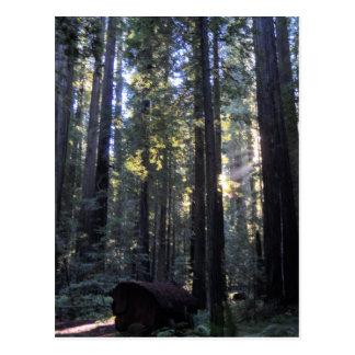 Humboldt Redwoods State Park Post Cards