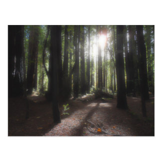 Humboldt Redwoods State Park Post Card