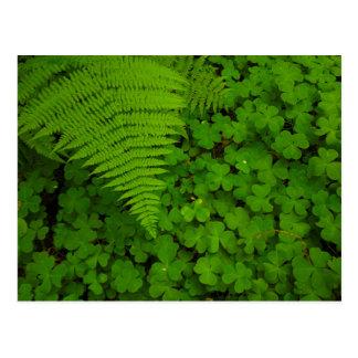 Humboldt Redwoods State Park Postcard