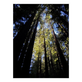 Humboldt Redwoods State Park Poster