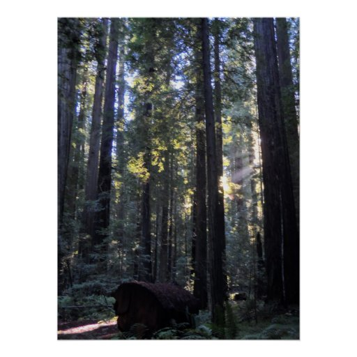Humboldt Redwoods State Park Print