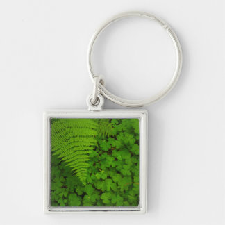 Humboldt Redwoods State Park Silver-Colored Square Keychain