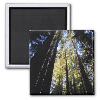 Humboldt Redwoods State Park Square Magnet