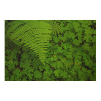 Humboldt Redwoods State Park Wood Canvases