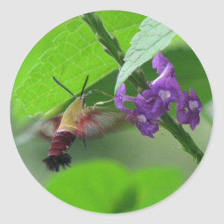 Hummer Moth Vervain Sticker