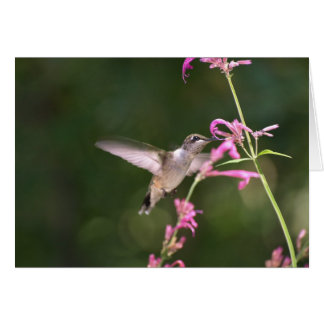 Humming Bird Agastache Card