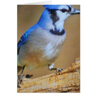 Humming Bird Card