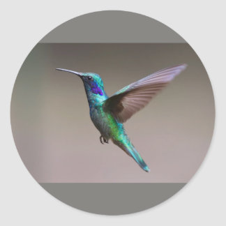 Humming Bird Classic Round Sticker, Matte Classic Round Sticker