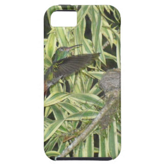 humming bird iPhone 5 covers