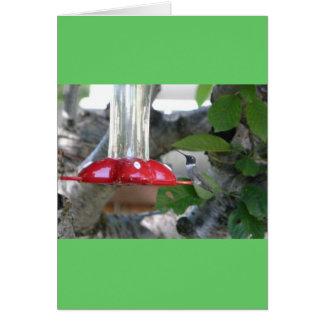 humming bird on feeder card