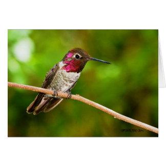 Hummingbird095 Card