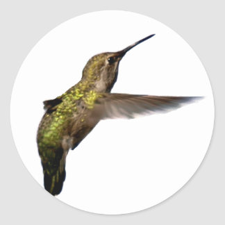 hummingbird_02 classic round sticker