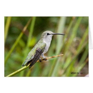 Hummingbird 069 card