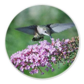 Hummingbird 13 ceramic knob