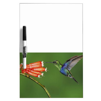 Hummingbird-1 Dry Erase Board Message Board