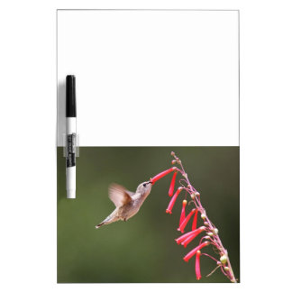 Hummingbird-2 Dry Erase Board Message Board