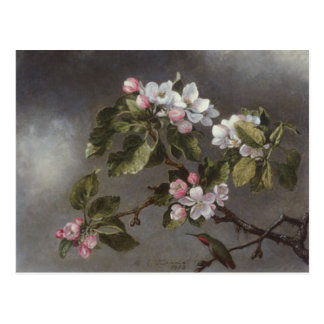 Hummingbird and Apple Blossoms Martin J. Heade Postcard