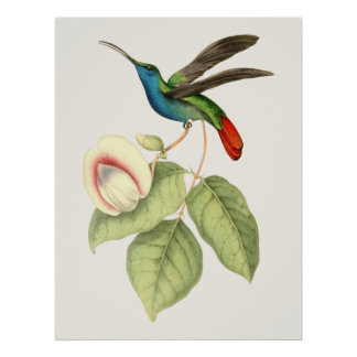 Hummingbird and Flower Poster