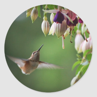 Hummingbird And Fushia Flower Plant Sticker