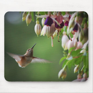 Hummingbird and Fushia Plant Mouse Pad