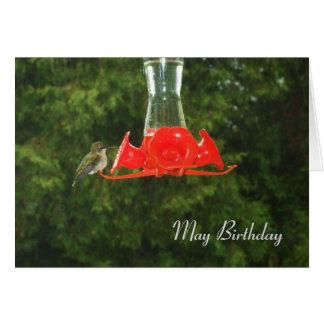 Hummingbird at Feeder Card