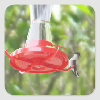 Hummingbird at Feeder Square Sticker