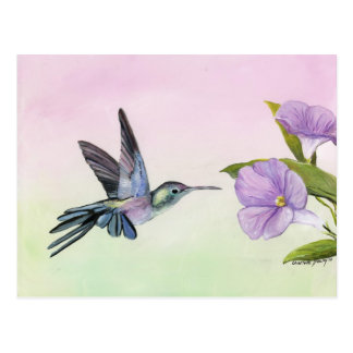 Hummingbird at Morning Glory bird art Postcard