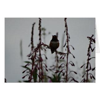 Hummingbird at rest card