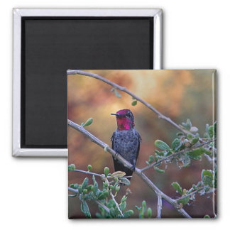 Hummingbird at sunset magnet