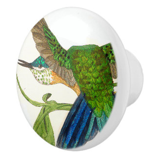 Hummingbird Bird Animal Wildlife Knob