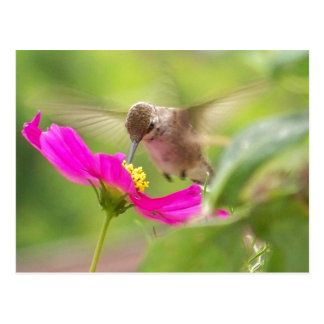 Hummingbird Bird Wildlife Animal Floral Postcard