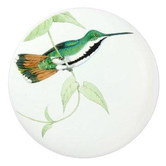 Hummingbird Bird Wildlife Animal Garden Knob