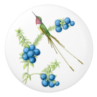 Hummingbird Bird Wildlife Animal Garden Knob