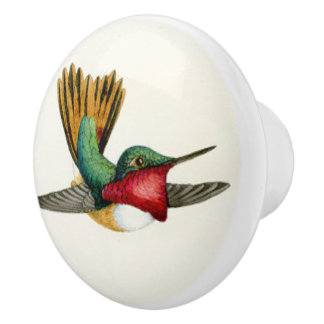 Hummingbird Bird Wildlife Animal Knob