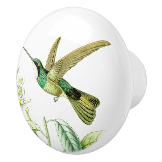 Hummingbird Bird Wildlife Animals Blossoms Knob