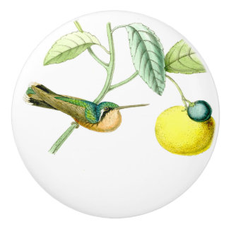 Hummingbird Bird Wildlife Animals Fruit Knob