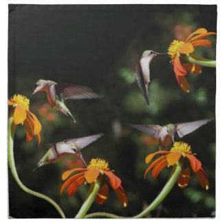 Hummingbird Birds Floral Animal Wildlife Flowers Napkins