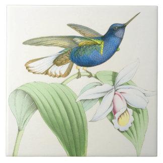 Hummingbird Birds Flowers Floral Wildlife Animals Tile