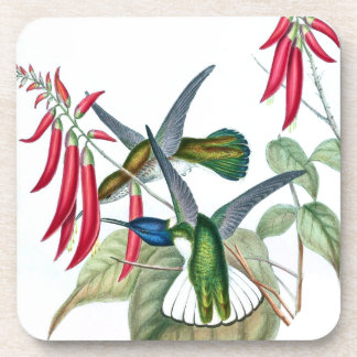 Hummingbird Birds Wildlife Animal Flowers Coaster