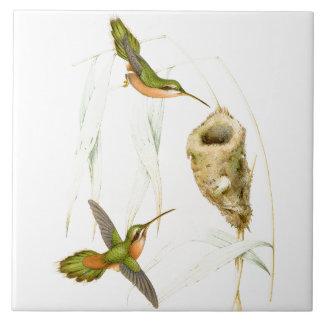 Hummingbird Birds Wildlife Animals Nest Tile