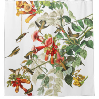 Hummingbird Birds Wildlife Audubon Shower Curtain
