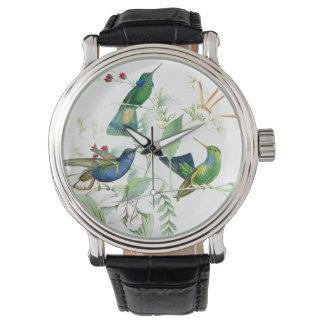 Hummingbird Birds Wildlife Floral Flowers Watch