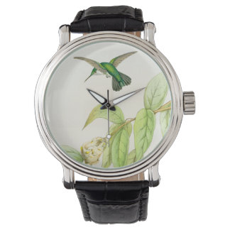Hummingbird Birds Wildlife Flowers Animals Floral Watch