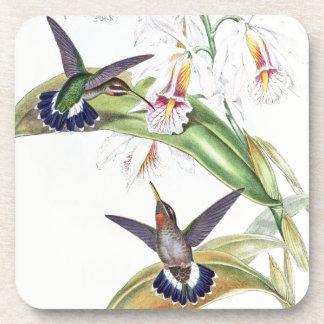 Hummingbird Birds Wildlife Orchid Flowers Coaster