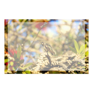 Hummingbird, California, Photo with border Stationery