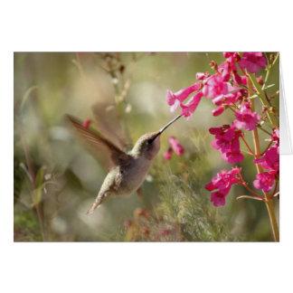 Hummingbird Card_Anna's Hummingbird Card
