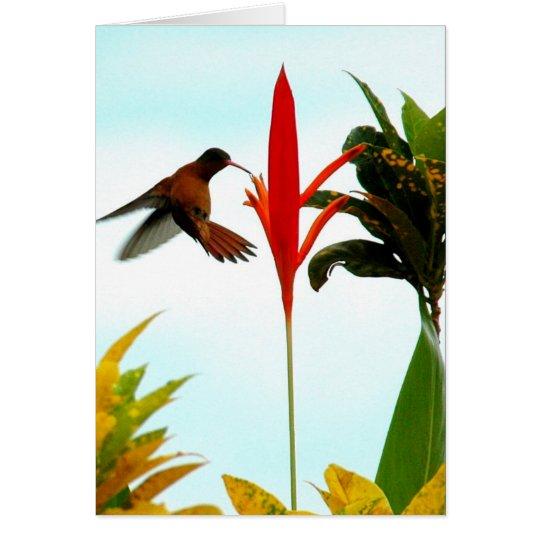 Hummingbird Card (Pose 1)