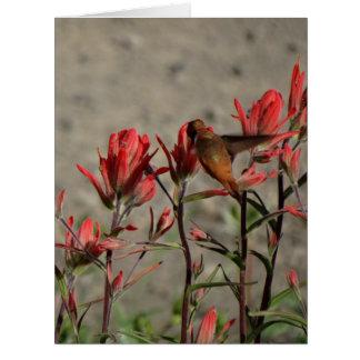 hummingbird cardinal flw. card