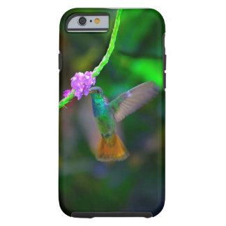 Hummingbird Tough iPhone 6 Case