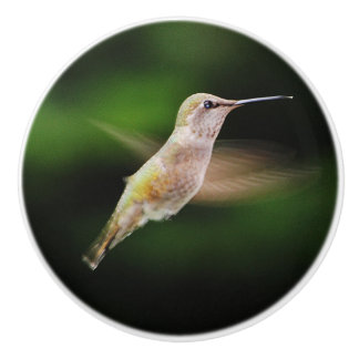 Hummingbird Ceramic knob